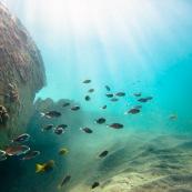 Fonds sous-marin de Guadeloupe. Poissons. Vue sous-marine. Sous l'eau. Plongee. Snorkeling. Rayons de lumiere.