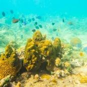 Fonds sous-marin de Guadeloupe. Poissons. Vue sous-marine. Sous l'eau. Plongee. Snorkeling.