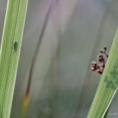 Micro-paysage. Herbe. Coléoptère insecte. ombre fleur.  Jardin. Graminés.