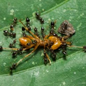 Petites et grosse fourmis