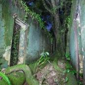 Guyane. Vestiges du bagne. Iles du salut. Ruines, cellules, prison, nature ayant repris ses droits. De nuit. Sur l'ile saint joseph.