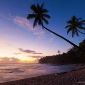 Guyane. Iles du salut. Sur l'ile saint joseph. PLage avec eau transparente et cocotiers.