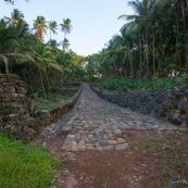 Guyane. Iles du salut. Sur l'ile saint joseph. Dans le bagne, cellules prison, nature ayant repris ses droits.