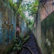 Guyane. Iles du salut. Sur l'ile saint joseph. Dans le bagne, cellules prison, nature ayant repris ses droits.  Avec des fantomes.