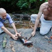 Peche a l'Aymara. Hoplias aimara. En Guyane, foret tropicale amazonienne. Personnes en train de decouper le poisson avec une machette (sabre).