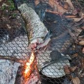 Peche a l'Aymara. Hoplias aimara. En Guyane, foret tropicale amazonienne. Peche avec une trappe. Poisson en train de griller sur le feu.