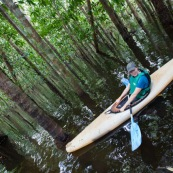 Kayak, kayaliste, en Guyane, foret tropicale amazonienne. Sur une riviere (crique). Dans une foret innondee.
