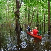 Kayak, kayakiste, en Guyane, foret tropicale amazonienne. Sur une riviere (crique). Canoe dans la foret innondee. Du coté des Pripris de Yiyi et de la crique Yiyi vers Sinnamary.