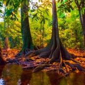 Crique gabrielle dans la reserve naturelle des marais de Kaw, avant le lac pali. Foret tropicale amazonienne. Guyane. Riviere. Arbres. Coucher du soleil.