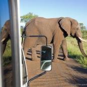 Elephant Afrique du Sud traverse la route
