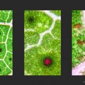 triptyque paysages végétaux au microscope.