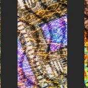 Billet de 5 euros observé au microscope avec 3 éclairage différents (même cadrage exactement) Triptyque