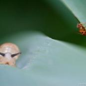 Escargot et coléoptère
