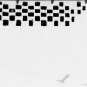 Pigeon s'envolant d'un trou dans une faÁade de maison. Oiseau en ville. En noir et Blanc.Classe : AvesOrdre : ColumbiformesFamille : Columbidae