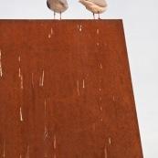 Deux mouettes rieuses à Paris vues de profil sur un mur. Des excréments de mouettes parsèment le mur. Vue de l'arrière.Ordre : CharadriiformesFamille : LaridaeGenre : ChroicocephalusEspèce : Chroicocephalus ridibundus