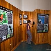 Centre d'interpretation du parc national Yanachaga Chemillen. Touriste au milieu des panneaux. Perou. Coq de roche peruvien.