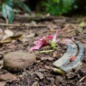 En plein dans la zone protégée intégralement du Parc National Amboro (Bolivie), une cartouchiere sur un chemin indique que la chasse se pratique dans cette zone protégée. Balle, chasse illegale, fusil. Avec une fleur rose tombee a terre.