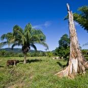 Deforestation a Amboro