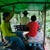 En voiture a cheval au milieu de la jungle bolivienne. Foret tropicale. Bolivie. Ecotourisme.