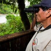 Garde-parc en train de faire du recensement d'animaux depuis une cabane en bois, un mirador permettant d'observer une riviere ou viennent régulierement de grands mammiferes (tapirs, cerfs, sangliers...). Affut. Jumelles. Perou.