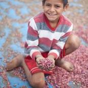 Dans un village en Bolivie,  les haricots qui sèchaient au soleil. Campagne, enfant.