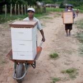 Nouvelles ruches