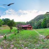 Panorama bassin amazonien maison dans la foret avec animaux. Paysage. Perou.