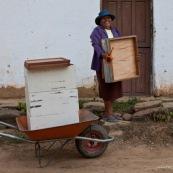 Dans la campagne bolivienne, un couple trasnporte de nouvelles ruches. Pour eux, c'est une alternative à la déforestation pour la culture de riz ou autre. L'apiculture est un moyen de protéger la forêt tout en assurant des revenus. Initiative de Fundacion Natura Bolivia. Bolivie.