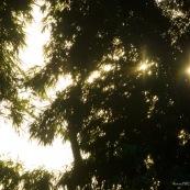 Ambiance forêt avec soleil perçant à travers les arbres.