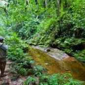 Forêt tropical avec personne.