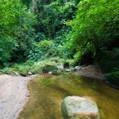 Forêt tropical rivière caillou dans l'eau.