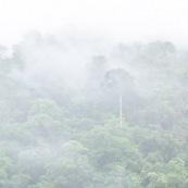 Foret de nuage dans la brume. Forêt tropicale.