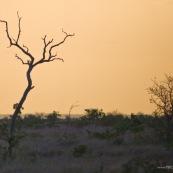 Afrique du sud parc kruger. Paysage.