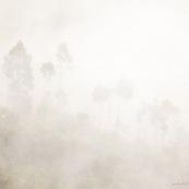 Arbres dans la brume. Silhouettes.
