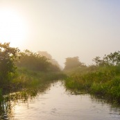 Marais de Kaw Guyane. Lever de soleil.