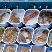 Scene de retour de peche en Chine, port de Sai Kung a Hong-Kong. Vente a la criee. Retour des bateaux. Vente des poissons. Matin brumeux. Peche traditionnelle.  Dans le bateau, poissons vivants frais.
