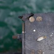 Poisson mort sur un coin de quai. Hong-Kong. retour de peche.