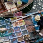 Scene de retour de peche en Chine, port de Sai Kung a Hong-Kong. Vente a la criee. Retour des bateaux. Vente des poissons. Matin brumeux. Peche traditionnelle.  Poisson perroquet (Scaridae) pour restaurant. Vente a la criee : le pÍcheur presente son poisson dans l'epuisette. Contre plongee. Vue depuis le quai, bateau en dessous, choix de poissons.