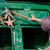 ScËne de retour de pÍche en Chine, port de Sai Kung a Hong-Kong. Vente a la criee. Retour des bateaux. Tri des Ètoiles de mer, femme avec une Èpuisette mettant de cote des Ètoiles de mer sur un petit bateau pour les vendre.