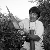 Indigene Waorani montrant sa sarbacane. En train de préparer la fleche au bord d'une riviere. En train d'enduire la fleche de curare, un poison très violent. Amerindien.