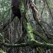 Jeune femme nue dans la foret tropicale amazonienne. Guyane. Nu artistique. Mangrove. Remire Montjoly sentier des salines.