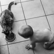 Bebe et chat. Portrait. En train de manger des croquettes. Qui est l'animal ?
