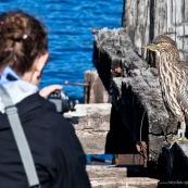 Femme en train de filmer un oiseau (héron).