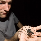 Amblypyge (Amblypygi). Arachnida. Arachnide. Vue de face, personne présentant la créature de face dans sa main.