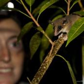 Marsupial et observateur