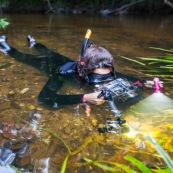 Plongeur dans une crique de Guyane. Riviere. Photographe sous-marin. Photo sous-marine. Reflex avec caisson. Riviere Tonnegrande. Observation sous l'eau. Femme en combinaison. Plongee.