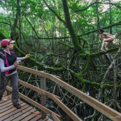 Jeune femme nue dans la foret tropicale amazonienne. Guyane. Nu artistique. Sentier des salines Remire Montjoly. Se decouvre elle-meme. Ponton. Randonneuse.