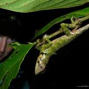 Femme en train d'observer un lézard (reptile) dans la foret tropicale amazonienne. Observation. Anolis.