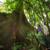 Couple en train d'observer aux jumelles au pied d'un arbre. En foret tropicale amazonienne. Arbre remarquable. Fromager. Ceiba. En Equateur.