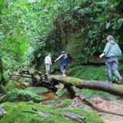 Expedition a pied en foret tropicale (jungle,) avec traversee d'une riviere. Trois personnes. Randonnee. Sur un tronc d'arbre.
